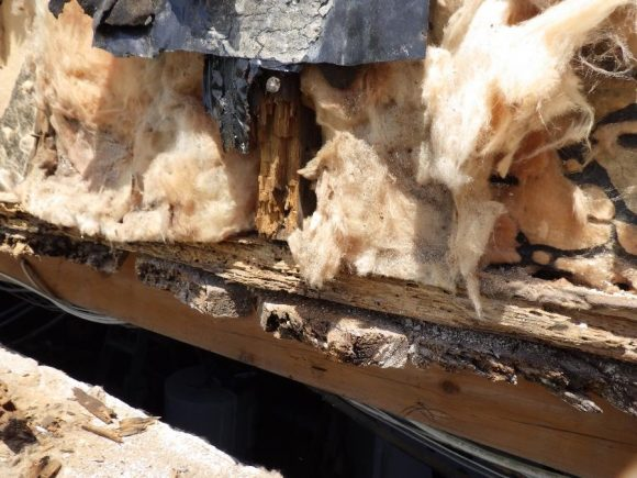 Expertise in hidden defect, wooden structure damaged by carpenter ants
